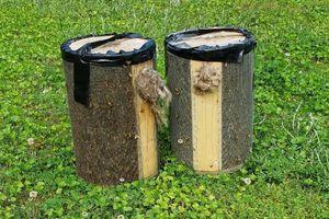 Một cư dân Mỹ phát hiện nhà có tổ ong 100.000 con