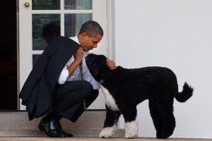Ông Obama đăng tweet tiếc thương cựu đệ nhất khuyển của Nhà Trắng