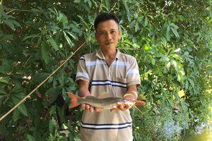 Thu lãi cao nhờ nuôi cá lăng đuôi đỏ trong đất
