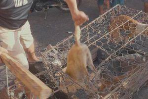Quy định của pháp luật về xử lý hành vi đánh đập, hành hạ vật nuôi