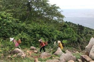 ĐSQ New Zealand hỗ trợ 800 triệu đồng trồng rừng ở Ninh Thuận