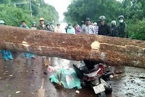 Lốc xoáy quật đổ cây rừng trên Quốc lộ 28B, 2 người thương vong