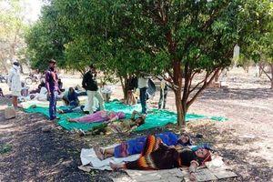 Sợ đến viện, người Ấn Độ tới trang trại cam nằm gốc cây để chữa COVID-19