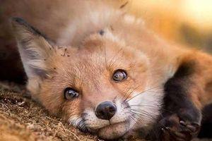 Ảnh chụp thế giới động vật hoang dã ở Phần Lan đẹp như cổ tích