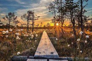 Những bức ảnh chứng minh khu rừng cổ tích ở Phần Lan là có thật