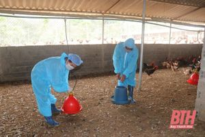 Chăn nuôi an toàn sinh học vượt qua 'bão' dịch bệnh