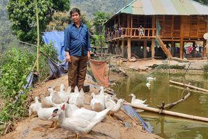Lai Châu: Triệu phú người Mảng ở Trung Chải