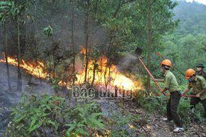Bắc Giang: Huy động hơn 350 người tham gia chữa cháy rừng tại Yên Dũng