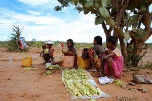 Madagascar: Hạn hán nghiêm trọng khiến hơn 1 triệu người đối mặt nạn đói