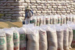Bộ Nông nghiệp Mỹ dự báo Việt Nam tiếp tục đứng thứ hai về xuất khẩu gạo