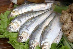 Cá mòi giúp phòng ngừa bệnh đái tháo đường typ 2