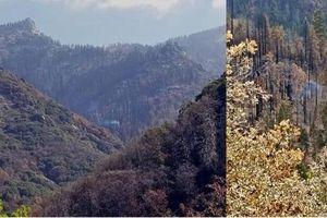 Cây Sequoia khổng lồ vẫn âm ỉ cháy suốt 9 tháng qua