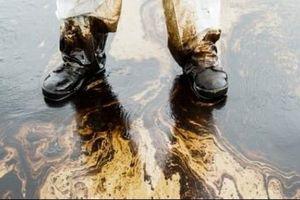 Các tổng giám đốc Royal Dutch Shell có phải chịu trách nhiệm về sự cố tràn dầu?