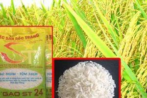Ông Hồ Quang Cua muốn nhượng lại quyền sở hữu giống lúa ST24, ST25, Bộ NN&PTNT nói gì?