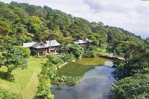Đại Hải Forest - Mô hình du lịch tiềm năng cho nhà đầu tư