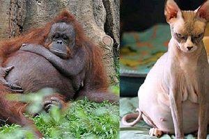 21 bức ảnh động vật khi mang bầu, 'quạu thì có quạu' nhưng vẫn dễ thương hết nấc