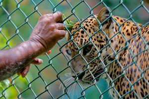 Trung Quốc: Để báo dữ sổng chuồng, sở thú giấu nhẹm suốt 2 tuần