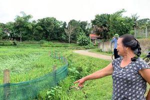 Nông dân Nghệ An thiệt hại nặng nề sau trận mưa lốc