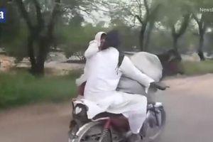 Bò được đi dạo bằng xe máy