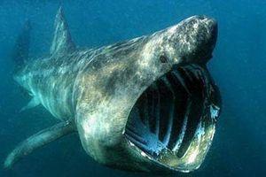 Sâu thẳm dưới đáy đại dương là loại thủy quái cổ xưa, tuy mù lòa nhưng tuổi cực thọ