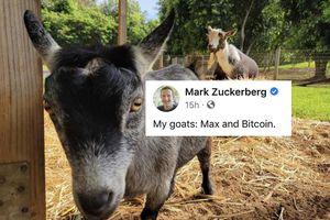 Tiền 'con dê' tăng giá gấp 5 lần nhờ bài đăng của Mark Zuckerberg