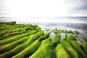 Bãi biển rêu phủ xanh ở Đài Loan