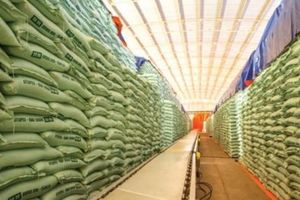 Bùng nổ đường nhập khẩu từ các nước ASEAN ngoài Thái Lan