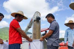 Năng suất lúa lai cao kỷ lục ở đảo Hải Nam