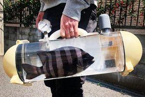 Độc lạ chiếc túi 'đi muôn nơi' dành riêng cho... cá cảnh