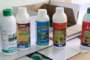 An Giang: Một giám đốc vận chuyển lượng lớn thuốc bảo vệ thực vật nghi giả