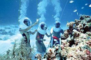 Bảo tàng sinh vật biển trên đảo