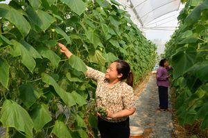 Mô hình nông nghiệp công nghệ cao: Thiếu liên kết, khó phát triển