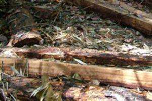 Tập trung ngăn chặn phá rừng, khai thác rừng trái pháp luật
