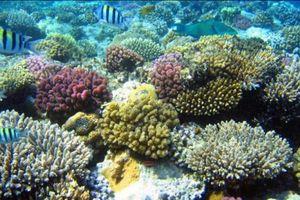 Suy giảm 90% san hô ở vịnh Nha Trang