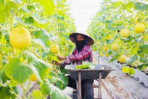 Gỡ rào cản cho nông sản an toàn