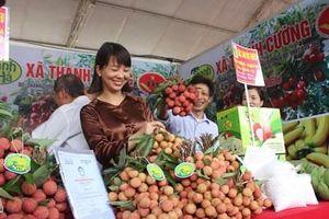 Xúc tiến tiêu thụ vải thiều Thanh Hà và nông sản tiêu biểu tỉnh Hải Dương