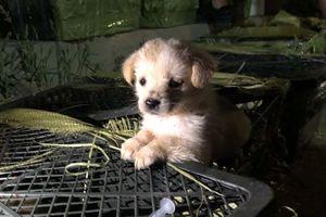 Chú chó chết đói trong hộp gửi qua đường bưu điện ở Trung Quốc