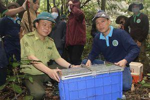Nỗ lực bảo vệ động vật hoang dã