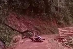 Cây đổ do mưa lốc làm 1 người tử vong