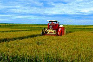 Vùng lũ Quảng Bình lúa được mùa, được giá