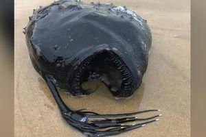 Mỹ: Cá 'quái vật' hiếm có bất ngờ trôi dạt vào bờ