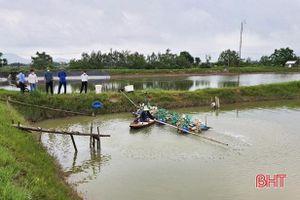 Người nuôi tôm huyện Kỳ Anh dập dịch đốm trắng, bảo vệ vụ tôm xuân hè