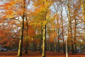 Mùa thu nước Bỉ: Bữa tiệc màu sắc diệu kỳ nhất trong năm