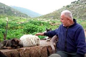 Người nông dân Lebanon nuôi 350 con chó