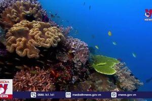 Hơn 90% các rạn san hô 'lâm nguy'