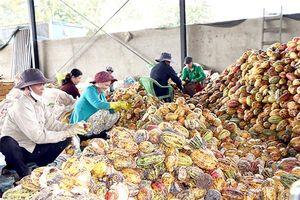 Sản xuất, chế biến nông sản không chất thải