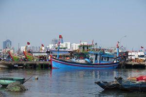 Đà Nẵng: Chủ động phòng dịch tại cảng cá lớn nhất miền Trung