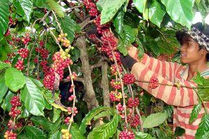 Kim ngạch xuất khẩu rau quả tăng mạnh nhờ tận dụng các FTA