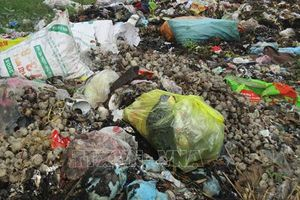 Cần dẹp bỏ bãi rác tự phát ở làng Lưu Xá