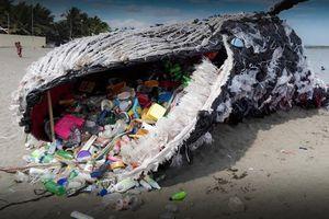 Mổ xác cá voi mõm khoằm, phát hiện 16 kg rác nhựa trong bụng